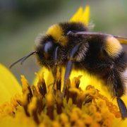 leiderschap, bijenherder, martin, madern