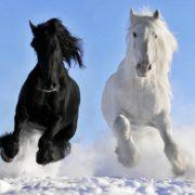 Paardencoaching als leiderschapstool!