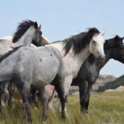 horsedream-paarden-leiderschap-martin-madern